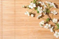 Blüten-Kirsche auf Hintergrund Lizenzfreie Stockfotos