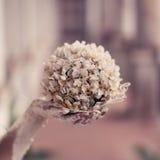 Blüten-Kugel Stockfotos