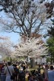 Blüten u. Festival, hoher Park Toronto Stockfoto