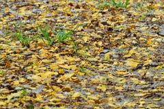 Blüten und Blätter in den Boden Lizenzfreie Stockbilder