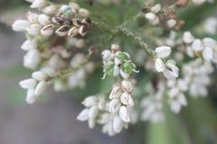 Blütenblume Lizenzfreies Stockbild