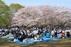 Blütenkirschjahreszeit in Tokyo Lizenzfreies Stockfoto