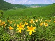 Blütenlilie Stockfotografie