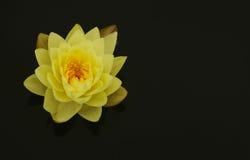 Blütenlotosblume in Thailand Lizenzfreie Stockfotos
