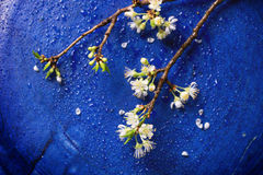 Blütenniederlassung Lizenzfreie Stockfotografie