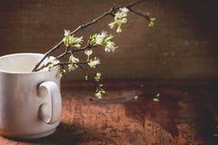 Blütenniederlassung Stockfotografie