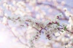 Blütenniederlassung Lizenzfreies Stockbild