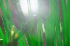 Blütenniederlassung Kirschblüte Lizenzfreie Stockfotografie
