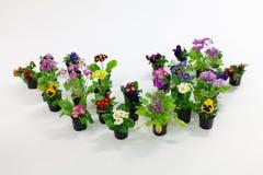Blütenpflanzen in den schwarzen Plastiktöpfen Stockbild