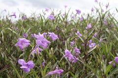 Blütenpurpurblume Stockfoto