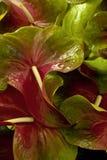 Blütenschweif stockfoto
