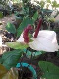 Blütenschweif lizenzfreie stockbilder