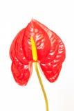 Blütenschweif Lizenzfreie Stockfotografie