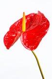 Blütenschweif Stockbild