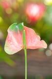 Blütenschweif Stockfotografie