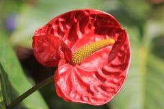 Blütenschweif lizenzfreie stockfotos