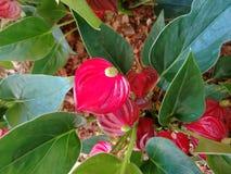 Blütenschweif lizenzfreies stockbild