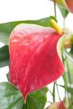 Blütenschweif Schöne Blume auf hellem Hintergrund Stockbild