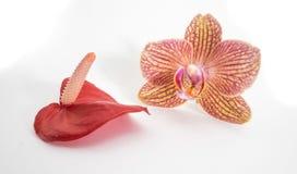 Blütenschweif und Orchidee lizenzfreie stockfotografie