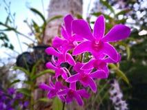 Blütenstand der rosa Orchidee stockfotografie