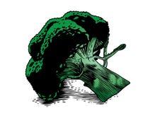 Blütenstand des Brokkolis stock abbildung