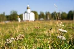 Blütenstand von Schafgarbe auf dem unscharfen Hintergrund der Herbstwiese mit weißer eleganter Kirche, Russland stockfoto