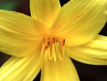 Blütenstaub Stockbild