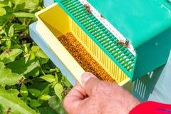 Blütenstaub der Bienen im Bienenhaus Lizenzfreie Stockfotos