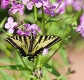 Blütenstaub-Jahreszeit lizenzfreies stockfoto