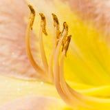 Blütenstaub-Träger Stockfotografie