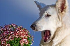 Blütenstauballergie Stockbild