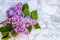 Blütenzweige der Flieder auf Marmorhintergrund lizenzfreies stockfoto