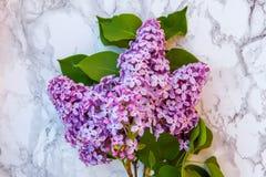 Blütenzweige der Flieder auf Marmorhintergrund stockfotos