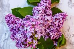 Blütenzweige der Flieder auf Marmorhintergrund stockfoto