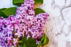 Blütenzweige der Flieder auf Marmorhintergrund lizenzfreies stockbild