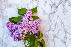 Blütenzweige der Flieder auf Marmorhintergrund lizenzfreie stockfotografie
