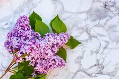 Blütenzweige der Flieder auf Marmorhintergrund lizenzfreie stockfotos