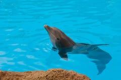 blått delfinvatten arkivfoton