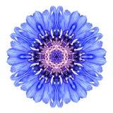 Blå blåklint Mandala Flower Kaleidoscope Isolated på vit Royaltyfria Foton