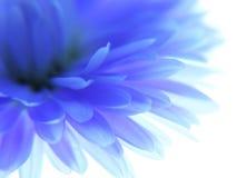 blå blomma Arkivbilder