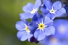 bl?a blommor fotografering för bildbyråer
