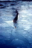 Blå is för vinter, fryst flod Royaltyfri Foto