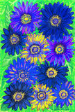 blå gerbera Arkivbilder