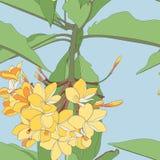 Bl?ht nahtloser Musterhintergrund des tropischen Blumensommers mit Plumeria mit Bl?ttern vektor abbildung