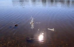 Bl? sj?vattenyttersida med krusningar och plaskaobjekt som faller in i det, medan reflektera solljuset royaltyfri foto
