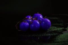 blå tomat Fotografering för Bildbyråer