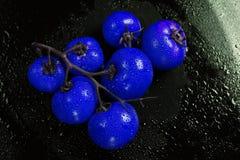 blå tomat Royaltyfri Foto