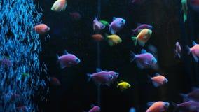 Bl?tt bevattnar och bubblar Bild av undervattens- yttersida för blått vatten och den färgglade fisken i det tropiska havet eller  stock video