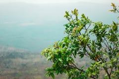 Bl?tter, Niederlassung und hoher Baum steht die Korbsau, die gen Himmel dominierend ist lizenzfreies stockbild