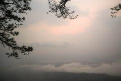 Bl?tter, Niederlassung und hoher Baum steht die Korbsau, die gen Himmel dominierend ist lizenzfreies stockfoto